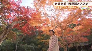 きょうのイドバタッ!木曜日 2018年11月15日 「紅葉見ごろ!宮島あそび 新スポット登場」 #25
