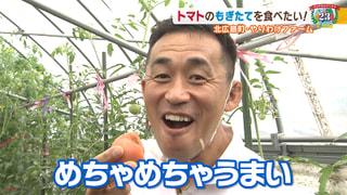 【北広島町 その4】トマト農家でもぎたてを堪能!#23