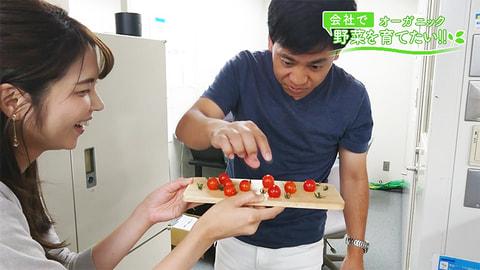 会社で野菜を育てたい!「赤ヘルはいかがですか~♪」第22回