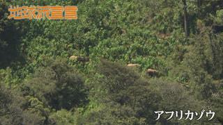 アフリカゾウ 水と緑に守られて(ケニア)